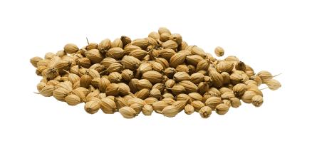 graines-de-coriandre